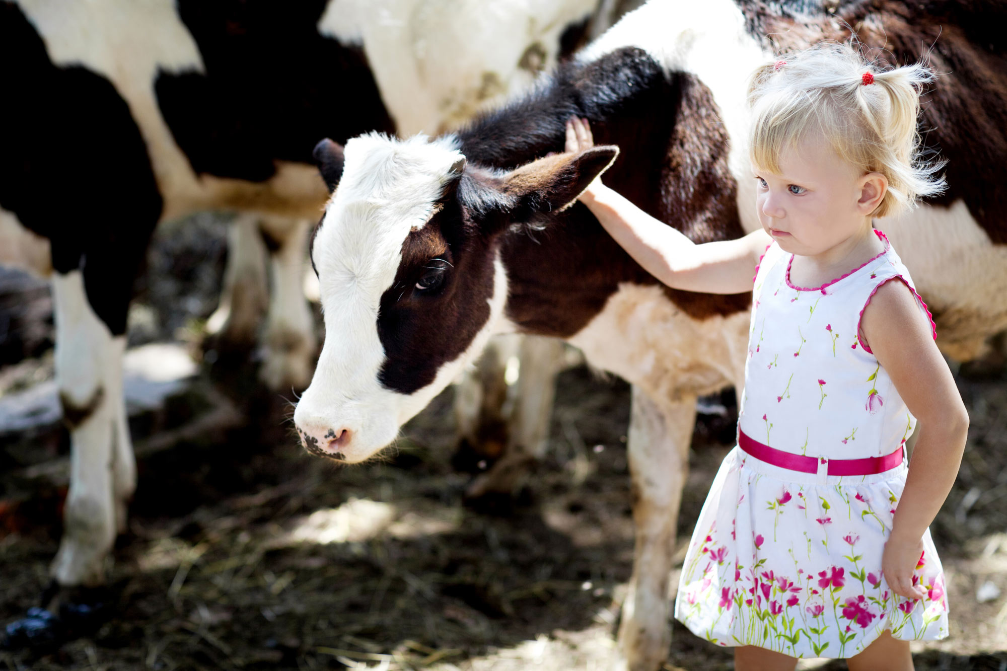 Young Girl with Calf